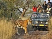 Wild Life With Golden Triangle 6 Nights/7 Days
