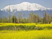 Kashmir 5 Nights Deluxe Special