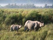 Beautiful Kaziranga National Park Tour