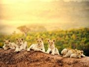 Tanzania Wildlife Safari Packages