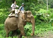 Mp Tour With Jungle Safari