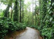 Mysore with Coorg Tour