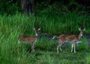 Nagarhole National Park Weekend Getaway Tour