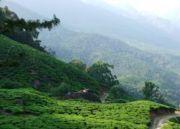 Natural Beauty of Kerala Tour