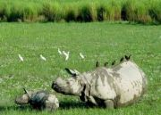 North East Wildlife  with Gir Tour  (  13 Nights )