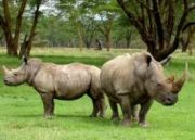 Northeast Angling and Rhino Tour (  13 Days / 12 Nights )