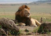 Amboseli National Park ( 3 Days/ 2 Nights )
