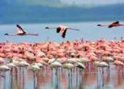 Amboseli wildlife Camping Tour (  )