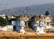 Pushkar Festival Tour ( 8 Days / 07 Nights )