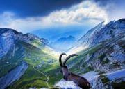 Rail Adventure in Switzerland Tour ( 8 Days/ 7 Nights )