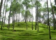Ranikhet Hill Tour