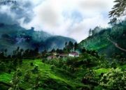 South India Hill Station Tour  7 Night 8 Days ( 8 Days/ 7 Nights )