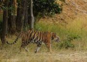 Southern India Wildlife Tour