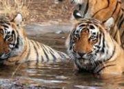 Standard Rajasthan Wildlife Tour  (  )