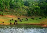 The South India Wildlife Tour