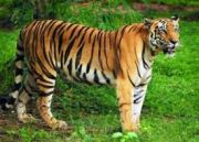 Tiger Tribal And Temple Tour