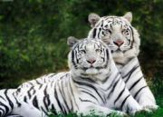 Amazing Golden Triangle With Tiger Tour (  7 Nights )