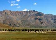 Trans Himalayan Safari Tour (  )