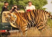 Wildlife Tour To North India