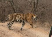 Bandhavgarh National Park Special Package
