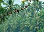 Best Kerala Tour Packages?