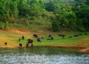 Best of Kerala, Ayurveda & Yoga retreay (  )
