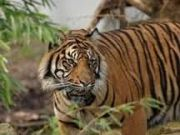 Central India Tigers and The Taj (  8 Nights )