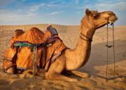 Cultural Tour Of  Rajasthan (  6 Nights )