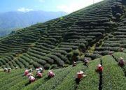 Darjeeling Getaway Tour