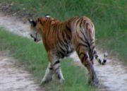 Dudhwa National Park Tour (  4 Nights )