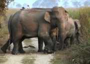East India With Wildlife Tour (  13 Nights )