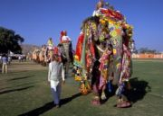 Elephant Festival and Golden Triangle Tour