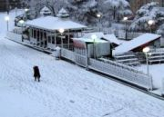 Fabulous Shimla Holidays Tour (  2 Nights )