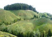 Hills Of Bengal Amazing Tour