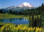 Himalayan Golde...