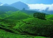 Honeymoon Munnar Tour (  4 Nights )