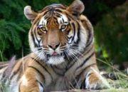 India - Nepal Wildlife Tour (  13 Nights )