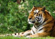 India Tiger Safari With Nepal