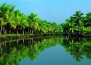 Kerala (04 Nights/05 Days) (  4 Nights )