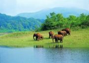 Kerala Cultural and Wildlife Tour