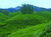 Kerala Munnar Travel Guide