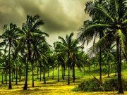 Amazing  Goa City Tour