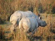 Hills With Wild Life Deluxe Package (  3 Nights )