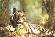 Ihc-21 Short Escape To Bandhavgarh Tour Package