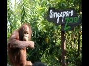 6 Days Singapore  and Malaysia Tour ex bangalore (  )