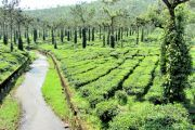 KERALA TOUR PACKAGE  2NIGHTS AND 3 DAYS ( 3 Days/ 2 Nights )