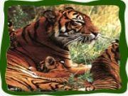 Holiday Wild Life Tour (jabalpur - Kanha - Pachmarhi - Jabal