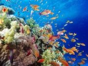 Lakshadweep Samundram By M.v. Kavaratti Tour Package