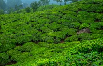 Kerala Delights(6KLN01)