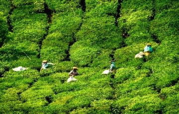 Kerala Exclusive(5NKL01)